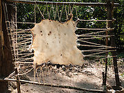 """Animal hide is stretched and dried at Powhatan Indian Village at Jamestown Settlement, Virginia, USA. Jamestown, the first permanent English settlement in the Americas, was founded as James Fort in 1607 within an area controlled by the Paspahegh tribe, which was part of the Powhatan Confederacy of tribes, Tsenacommacah, comprised of about 14,000 native people ruled by Wahunsonacock (sometimes called Powhatan). """"Jamestown Settlement"""" is the Commonwealth of Virginia's portion of the historical sites and museums at Jamestown. Created as part of the 350th anniversary celebration in 1957 as Jamestown Festival Park, Jamestown Settlement is adjacent to the complementary """"Historic Jamestowne"""" museum (which is on Jamestown Island, is the actual historic and archaeological site where the first settlers lived, and is run by the National Park Service and Preservation Virginia)."""