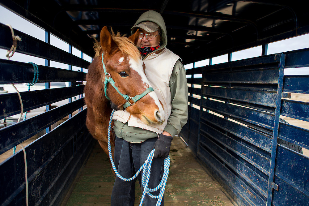 112013      Brian Leddy<br /> John Wayne tucks in close to his owner Lawerence Sam while waiting to be castrated Wednesday in Twin Lakes. The Navajo Nation veterinary program was in the area area administering birth control to mares and castrating colts and stallions in an effort to help with population control.