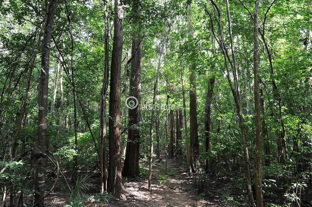 Altos-PI - Floresta Nacional dos Palmares. A Flona de Palmares esta inserida em uma zona de transição entre os biomas Caatinga e Cerrado - Altos e um municipio brasileiro no estado do Piaui, Faz parte da Grande Teresina = Altos-PI - National Forest dos Palmares. The Flona of Palmares is inserted in a transition zone between the Caatinga and Cerrado - Altos is a Brazilian municipality in the state of Piaui, part of the Great Teresina.