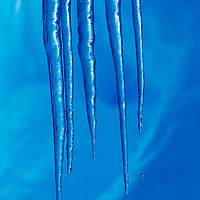 Antarctica, Icicles hang from iceberg hanging from roof of ice cave along Gerlache Strait along Antarctic Peninsula