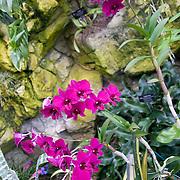 Olbrich Botanical Gardens, Madison Wisconsin