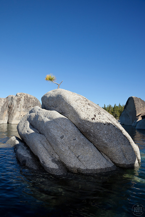 """Bonsai Tree on Lake Tahoe Boulder 3"" - This little pine tree on a island boulder was photographed near Speedboat Beach, Lake Tahoe."