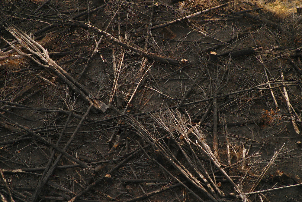 Burnt forestland on Chiloe Island, Chile, Feb. 11, 2004. Daniel Beltra/Greenpeace.