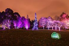 NOV 24 2013 Enchanted Woodland