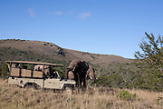 April 2009 Addo Elephant Back Safaris, Addo, Eastern Cape, South Africa