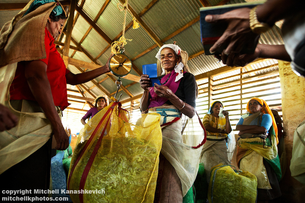 Weighing in the day's tea harvest at Wayanad, Kerala, South India