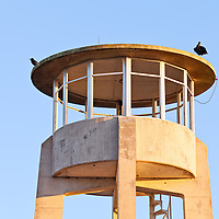 A crow and an American Black Vulture (Coragyps atratus) on the roof of the concrete observation tower in the Shark Valley section of Everglades National Park