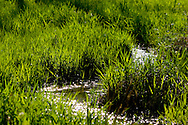 A small stream flows through a meadow alive with fresh green springtime grasses.