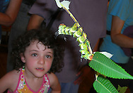 A girl watching a huge final instar Hickory Horned Devil at a live caterpillar show.  This is one of the largest caterpillars in the world.