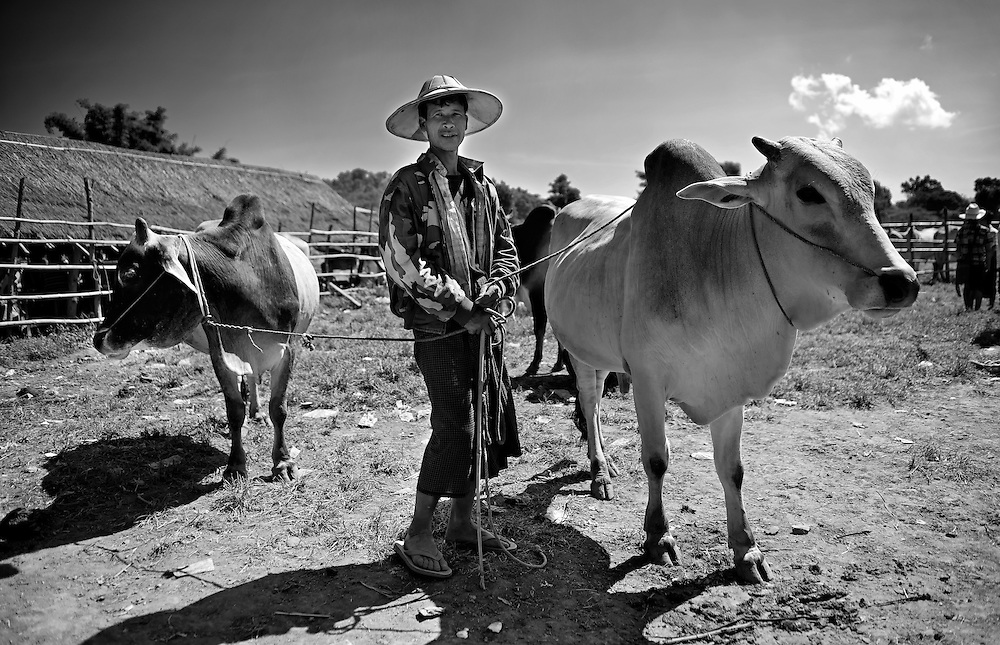 A farmer at the Heho livestock market, Myanmar.
