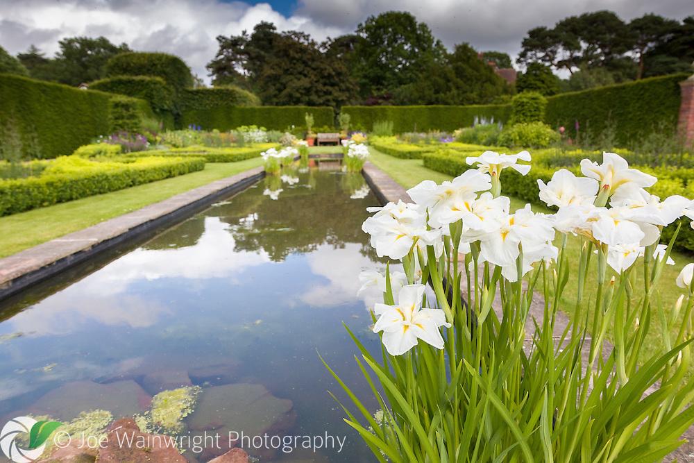Irises bloom beside the lake at Abbeywood Gardens, Cheshire.
