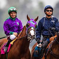 February 07 2015: California Chrome and Victor Espinoza at the San Antonio Stakes at Santa Anita Park in Arcadia CA. Alex Evers/ESW/CSM
