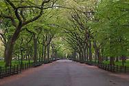 Central Park, Spring, The Mall, New York City, New York, Manhattan