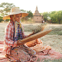 A Burmese Farmer in Bagan, Myanmar, de-hulls soybeans with the historic temples behind her