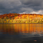 &quot;Floating Oak Leaf&quot;<br />