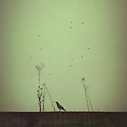 Vogel und Unkraut auf Hausdach, Wuppertal, Deutschland
