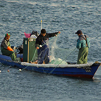Lima River., Portuguese fishermen recovering their nets after a day of fishing.