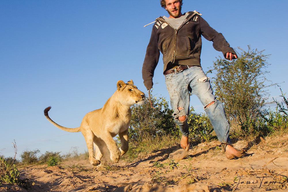 Lioness - Lioness