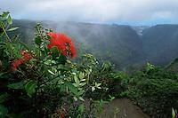 Flowering Metrosideros  (Metrosideros  sp.) shrub with rugged valley in the background.  Nuku Hiva Island, Marquesas Islands, French Polynesia