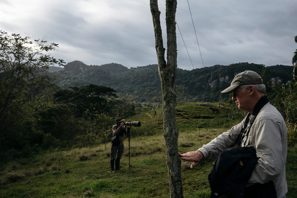 Ornithologists Martjan Lammertink, and Tim Gallagher, look for birds in the morning in Fallarones in Eastern Cuba on Jan 25, 2016.
