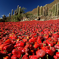Dried chilis, Valley near Cachi, Valles Calchaquies, Salta, Argentina, South America