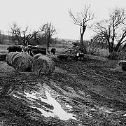 Landgrabbing, Land Grabbing, Deutschland, Ostdeutschland, Germany, Biogas,
