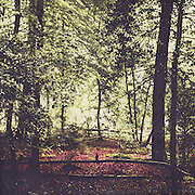 Serene forest scene in spring<br /> S6 products: https://society6.com/product/shadow-and-light_print#1=45<br /> <br /> Redbubble: http://www.redbubble.com/people/dyrkwyst/works/22184785-shadow-and-light?ref=recent-owner