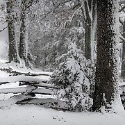 Fence in an early spring snowstorm. Adamson cabin, Lawrence county, Missouri.