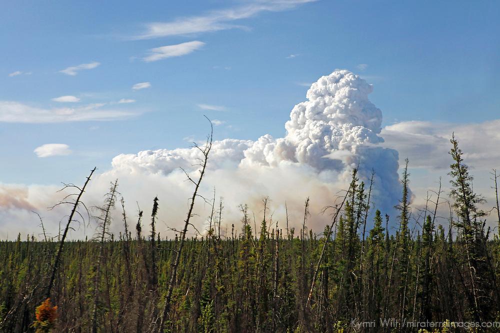 North America, USA, Alaska. Wildfire burning in Alaska.
