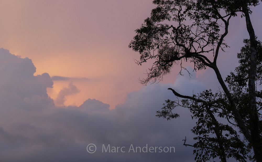 Silhouette of rainforest trees at sunset, Bukit Fraser Malaysia