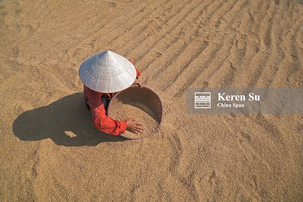 Farmer with conical hat drying rice.