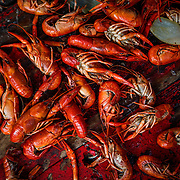 March 29 2014 - Freshly cooked crawfish sit collected during the Mudbugs in March crawfish festival at the Court Square in downtown Memphis. (William DeShazer/The Commercial Appeal)