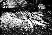 Dead fish in a market in Enshi city, Hubei province, China.