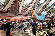 Indonesia, Sulawesi. A coffin with a body of a deceased is being put in a lokkian, a special funeral construction.<br /> <br /> The most important ceremony in Tana Toraja is a funeral, because of the beliefs, that without proper funeral rites the soul of the deceased will be not only enter the second life, but also will bring a misfortune to the whole members of the family.<br /> Although Torajan funeral tradition can vary depending on a particular village, a typical ceremony lasts for 4 days. The first day is a procession, during which the deceased is visiting the whole village. Second day it's &quot;receiving&quot;, when all the guests arrive and are welcomed by the family members. The third day is the most bloody, because of the buffalo slaughtery (the Torajans believe that the animals should follow people in the second life). On the fourth day the body is taken to the grave.