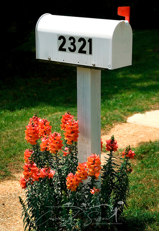 A mailbox, decorated with orange snapdragons, has a red flag raised to alert the postman to outgoing mail, April 23, 2007, in Northport, Alabama. (Photo by Carmen K. Sisson/Cloudybright)