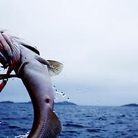 In Cod we trust by Eivind H. Natvig