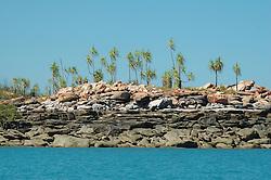 Pandanus spiralus waves in the wind on Wailgwin Island on the Kimberley coast.