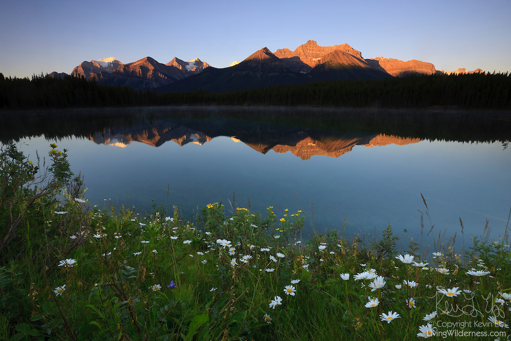 Several mountains that make up the Canadian Rockies are reflected in Herbert Lake. The lake, surrounded by summer wildflowers, is located in Banff National Park, Alberta.