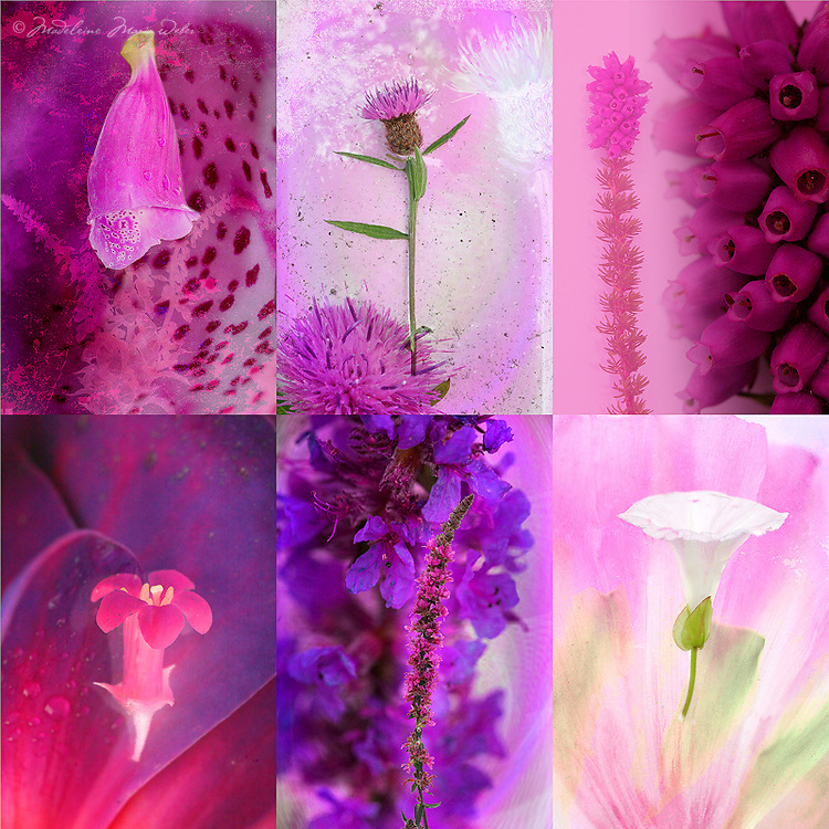 Irish flowers / fa047