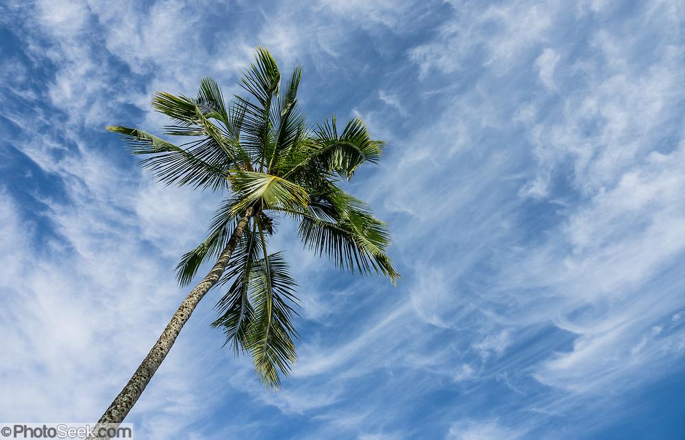 A palm tree silhouette against blue sky with wispy currus clouds. Kaipalaoa Landing County Park, Hilo Bay, on the Big Island, Hawaii, USA.