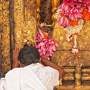 A Buddhist pilgrim prays at the Bodhi Tree, the descendent of the tree where the Buddha attained enlightenment, at the Mahabodhi Temple in Bodhgaya India.