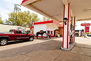 Cowboy and horse rest at gas station, Circle Montana