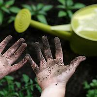 A young woman displays her dirt caked hands after working in her small city garden.