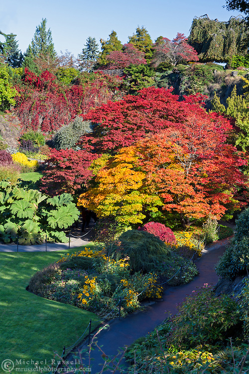 Japanese Maples in the gardens at Queen Elizabeth Park in Vancouver, British Columbia, Canada