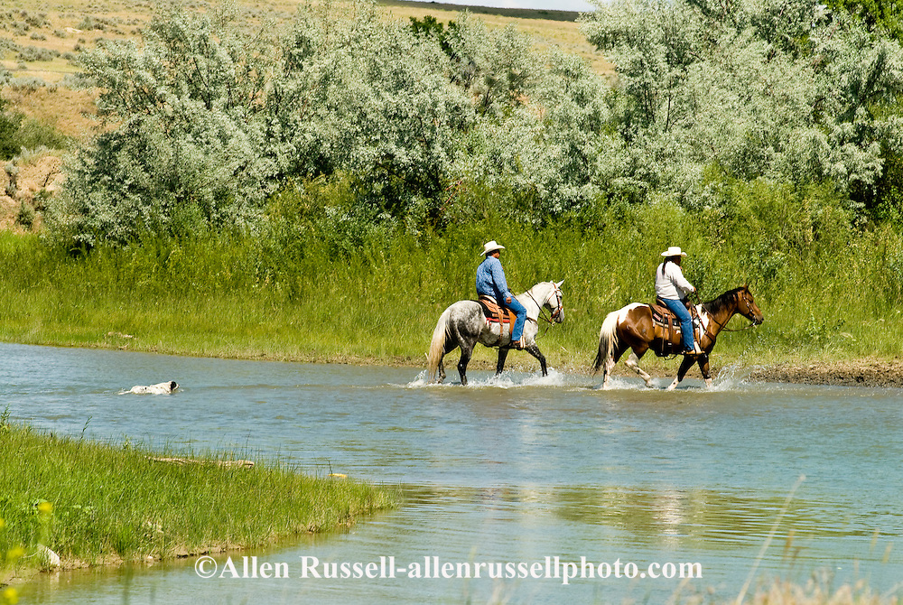 Crow Indian Reservation, Crow Indian cowboys cross Little Bighorn River, dog swims, Montana