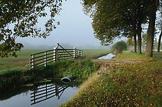 misty morning in 's-Graveland