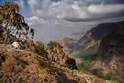 Amara, Debark, Debark, Simien Mountains park, ETH, Ethiopia