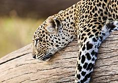Wildlife of Kenya / Quenia, animais