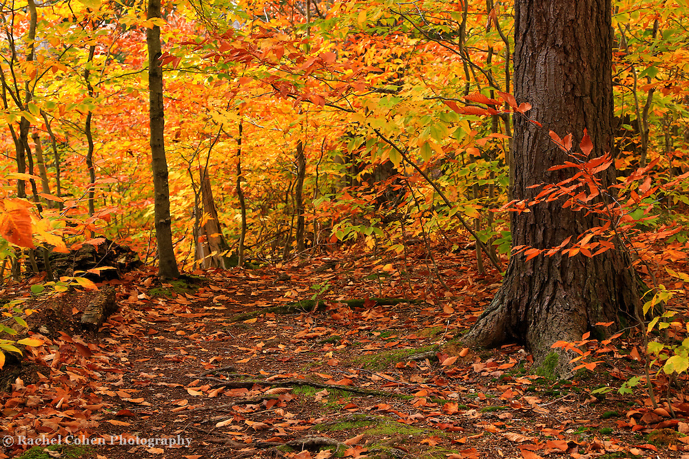&quot;Within Golden Glory&quot;<br />