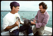 03: SEABIRD RESCUE DEHOOKING PELICANS